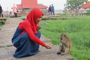 kalimantan monkeys