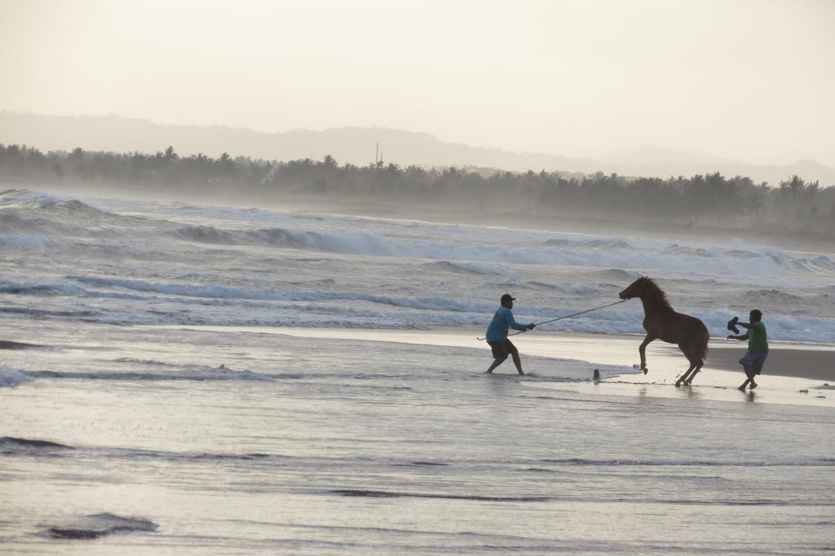 mar sea horse pangandaran