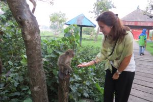 monkeys kalimantan berta torras