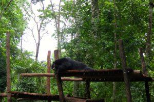 bears Kuang Si Falls