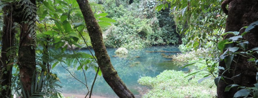 natura Bogor