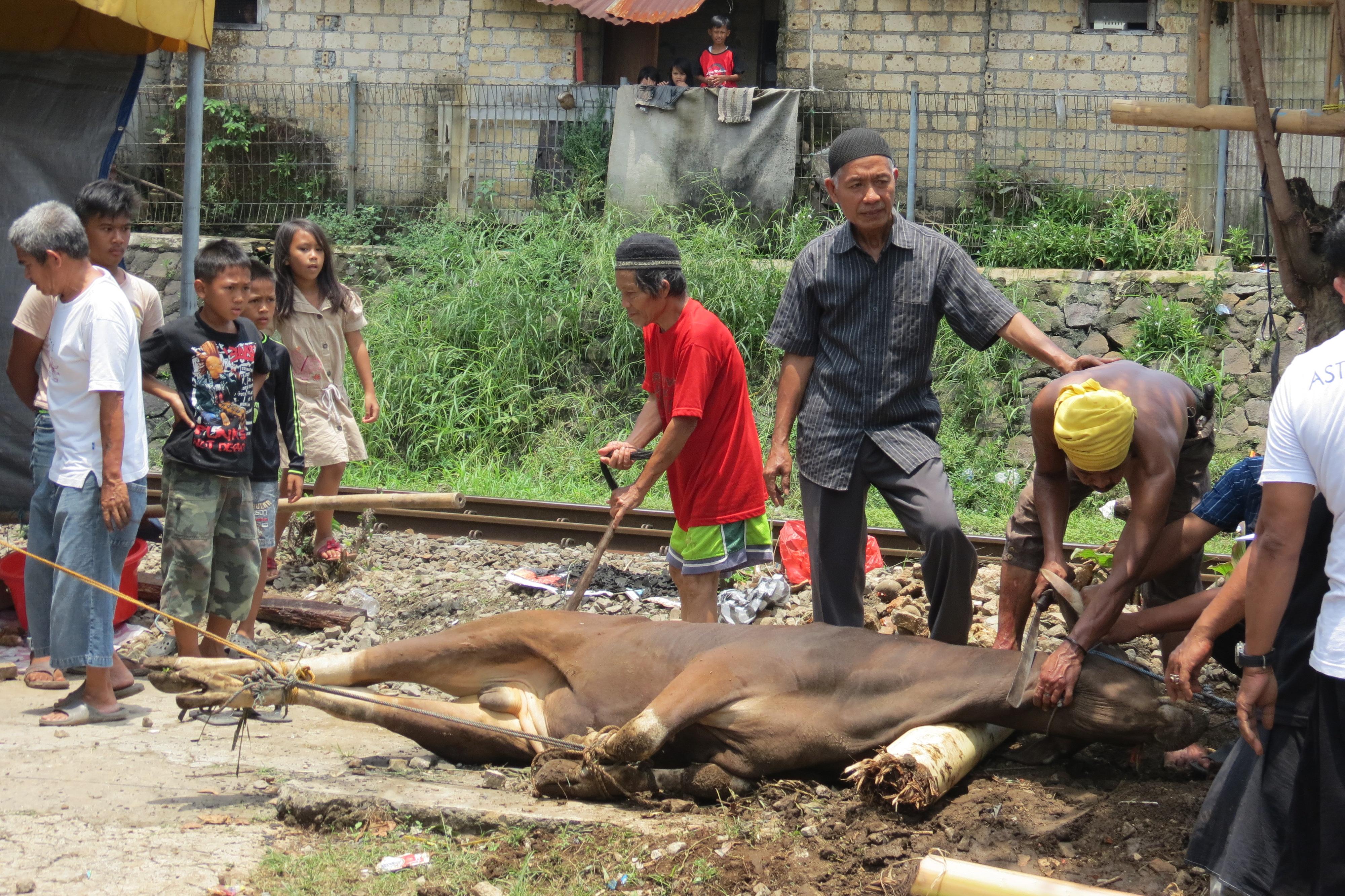 sacrifici Java Berta